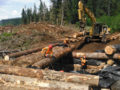 NorthPac-Forestry-Group-Bridges-Crossings