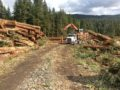 NorthPac-Forestry-Group-Trucking2