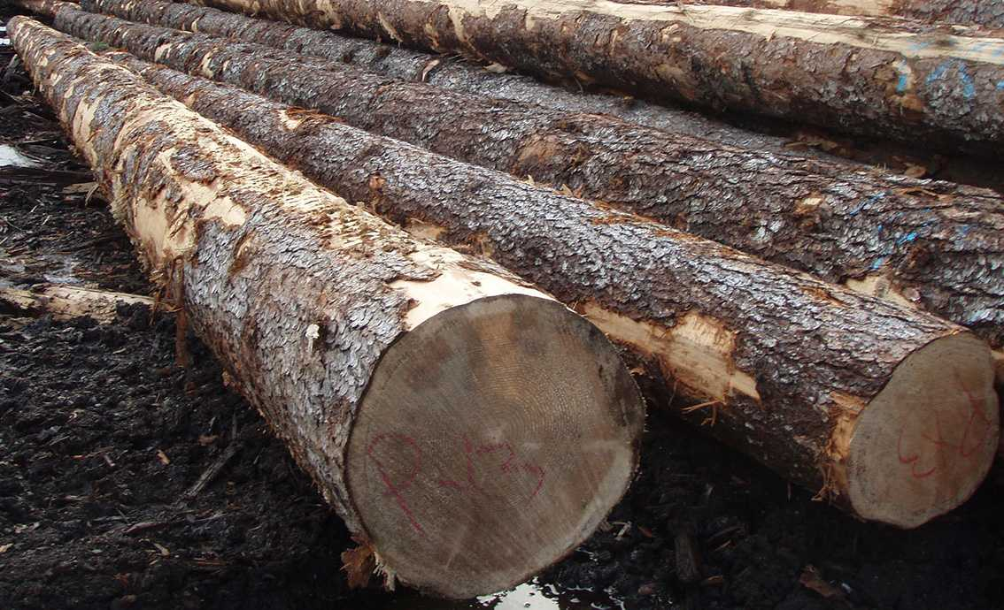 NorthPac-Forestry-Group-Pine-tablet