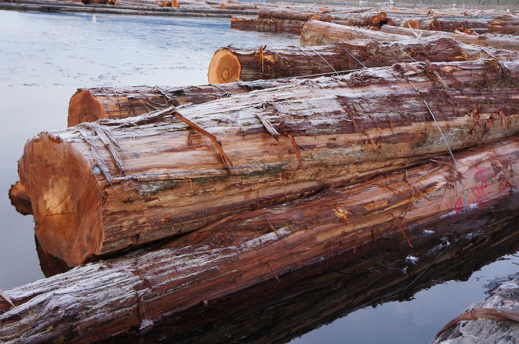 RED-CEDAR-logs